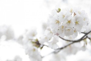 flowers-white-background--1505682-480x320